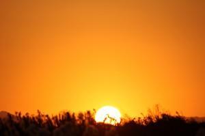 1127夕陽03